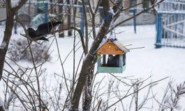 Pigeon se reposant dans la cuvette en parc images libres de droits