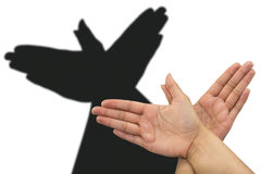 Pigeon shadow hand. Shadow theatre with hands showing a pigeon royalty free stock images