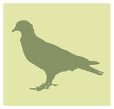 Pigeon Silhouette. Dove or Pigeon Silhouette, manually hand-traced Royalty Free Stock Photography