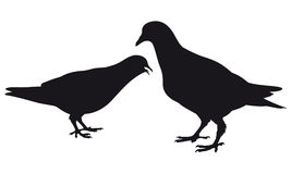 Pigeon. Silhouette. Vector Royalty Free Stock Photos