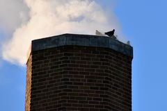 Pigeon silhouetted on a huge brick chimney stock photos