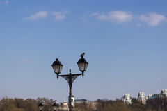 Pigeon sitting on a lamppost Stock Images