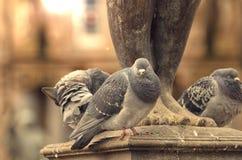 Pigeon sitting next to sculpture. Grey ruffle up pigeon sitting next to sculpture Stock Photography