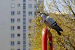 The pigeon is sitting on a steel structure Stock Images