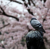Pigeon on a soiled statue. Stock Photos