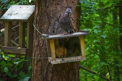 Pigeon and squirel in the forest in summer stock photos