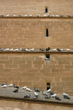 Pigeon Stairway. Many pigeons sitting on a building wall on three levels Stock Photography