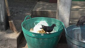 Pigeon stand on a garbage bin