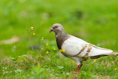 Bird and flowers Royalty Free Stock Image