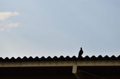 Pigeon standing on carved roof Stock Photos
