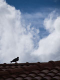 Pigeon Standing on The Roof Royalty Free Stock Images