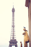Pigeon standing on a statue near Eiffel Tower Royalty Free Stock Photography