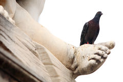 Pigeon on the statue Stock Images