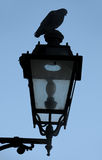 Pigeon on street lamp Stock Photography
