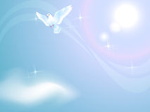 Pigeon in sunny sky. Flying pigeon in sunny sky Stock Photo