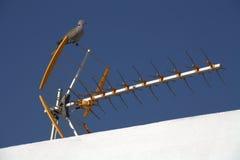 Pigeon sur l'antenne de TV Photos stock