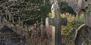 Pigeon sur la croix image libre de droits
