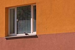 Pigeon sur la fenêtre Photo libre de droits