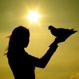 Pigeon sur la main de fille Image stock