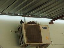 Pigeon sur le balcon, bord de fen?tre photographie stock libre de droits