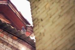 Pigeon sur le dessus de toit Photos stock