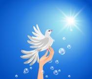 Pigeon sur une main et un soleil contre le ciel bleu. Image libre de droits