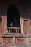 Pigeon on temple window Royalty Free Stock Photo