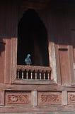 Pigeon on temple window Royalty Free Stock Photo