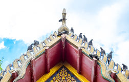 Pigeon on Thai temple roof with blue sky Stock Image