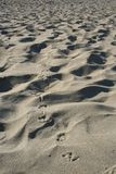 Pigeon tracks in sand Stock Photos
