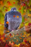 Pigeon on a tree Royalty Free Stock Photo