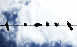 Pigeon under the sky Stock Photography