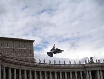 Pigeon in Vatican. Flying away to heaven Royalty Free Stock Photography