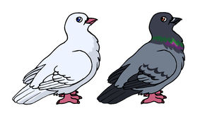 Pigeon. Vector illustration of a cartoon pigeon and dove Royalty Free Stock Image