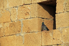 Pigeon on wall in Caesarea Maritima National Park Stock Photos