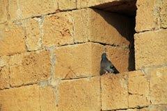 Pigeon on wall in Caesarea Maritima National Park Stock Photos