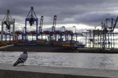 Pigeon watching loading of container vessel, cloudy day royalty free stock photography