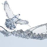 Pigeon of water Stock Photos