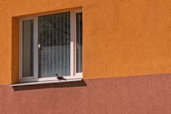 Pigeon On The Window Royalty Free Stock Photo