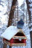 Pigeon in winter forest Stock Photography