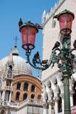 Pigeones de Veneza Fotos de Stock