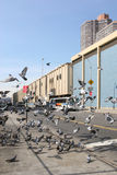 Pigeons à Manhattan Photographie stock