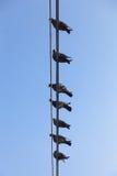 Pigeons étés perché sur un fil. Photo stock