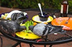 Pigeons Stock Image