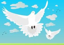 Pigeons Royalty Free Stock Image
