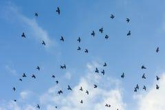 Pigeons Photos stock