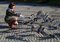 Pigeons Images libres de droits
