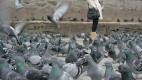 Pigeons Stock Photo