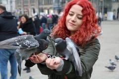 pigeons photographie stock libre de droits