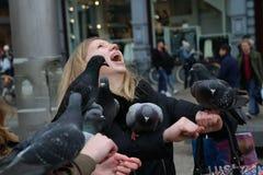 pigeons Photo stock
